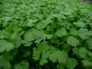 027-micro-celery