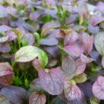 Micro Leaf